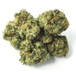 Order Quality G-13 Indica