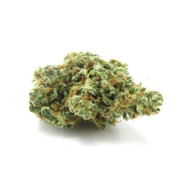 longs peak blue strain